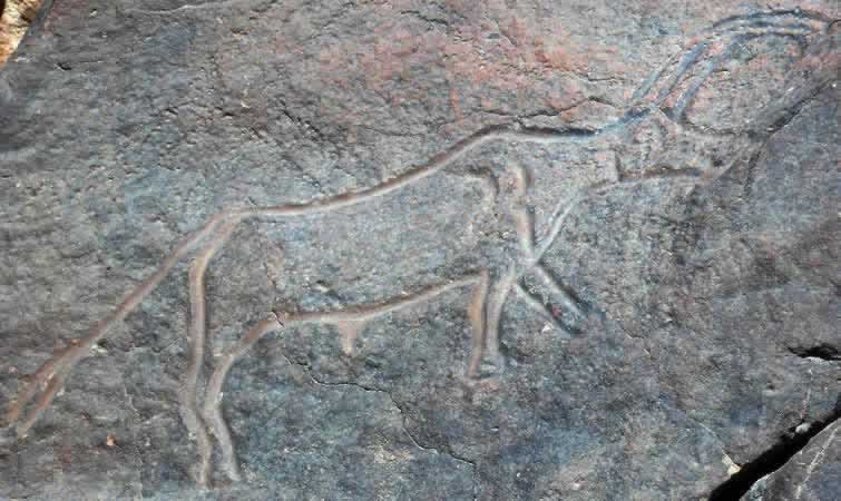 prehistoric engraving of a horned animal