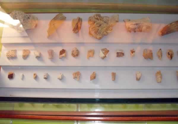 small dinosaur bones