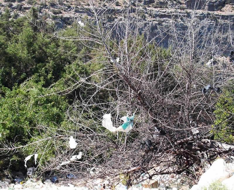 plastic bags caught in trees