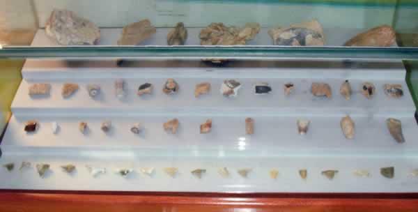 crocodile and fish fossil bones