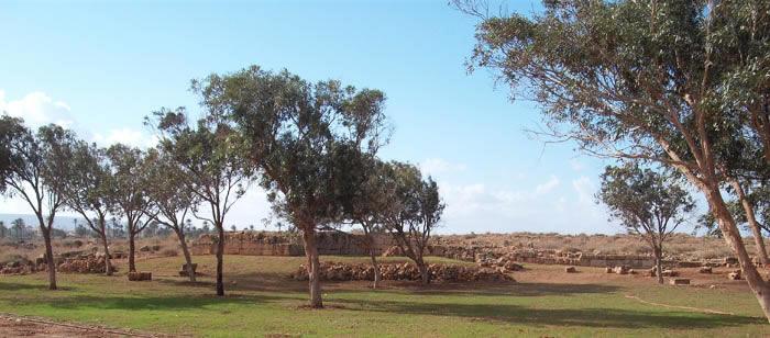Tokra scene: trees and sky