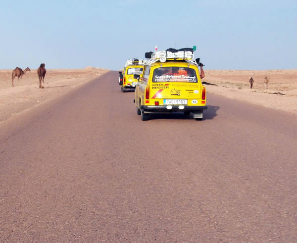 two yellow cars in the road and some camels on either side of the road