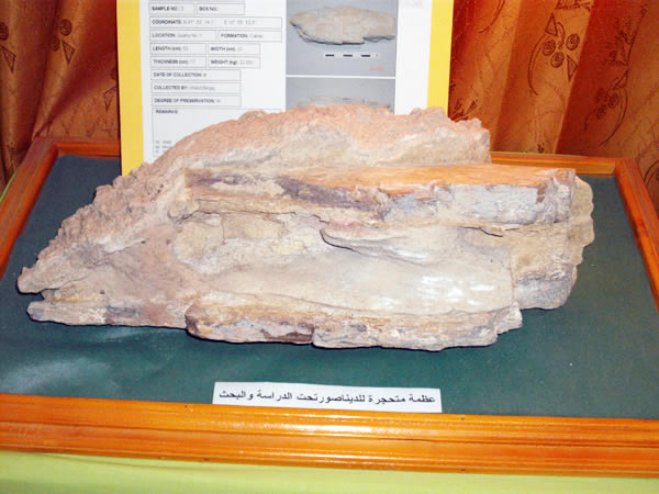 dinosaur fossil from Nalut