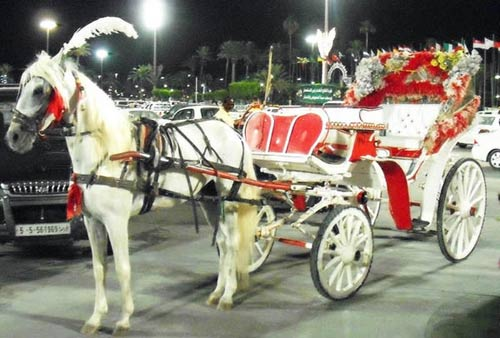 tripoli taxi chariot: white horse and white chariot with red seats