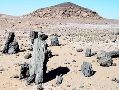 petrified trees from the Libyan Sahara, Fezzan, near Germa