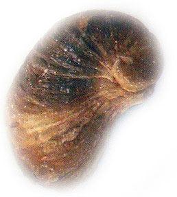 Sahara wildlife fossils