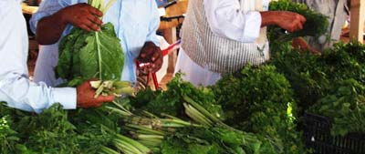 fresh herbs from the market