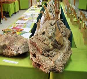 photo of exhibits at nalut dinosaur mueum