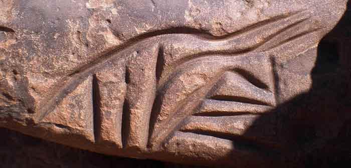 cat engraving