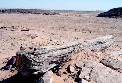 petrified tree trunks from the Sahara in southern Libya