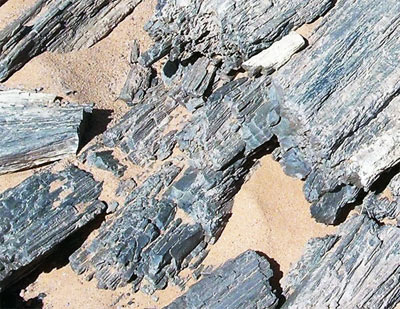 petrified tree trunks from the Sahara