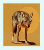 sahara wildlife