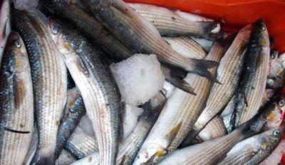 awargh: a type of local fish