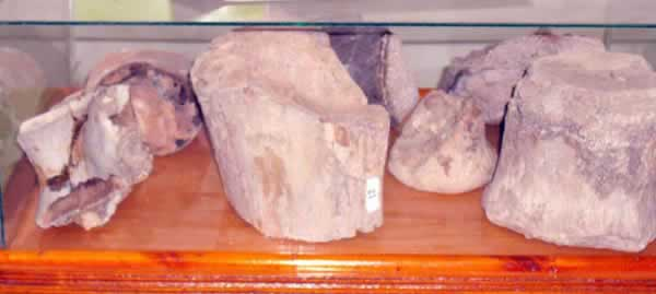 more fossilised remains