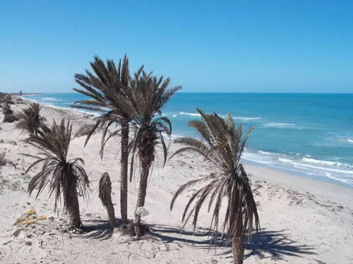 palmtrees by the beach of Farwah