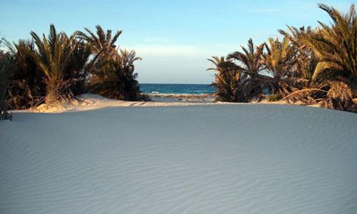 sand dunes and short palms by Zuwarah beach