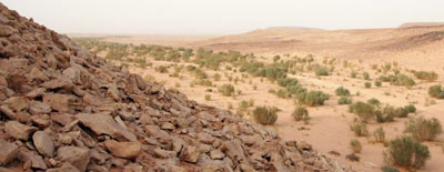 desert valley, sahara, with some bushes