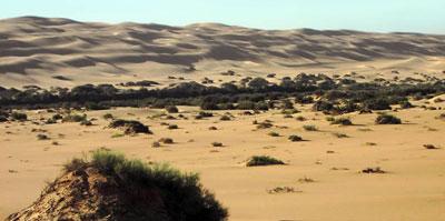 Sand dunes and  desert bushes
