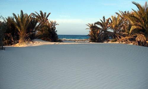 zuwarah beach with short palms and sand dunes at the front