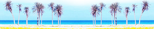 zuwarah (Zuwara) beach palms